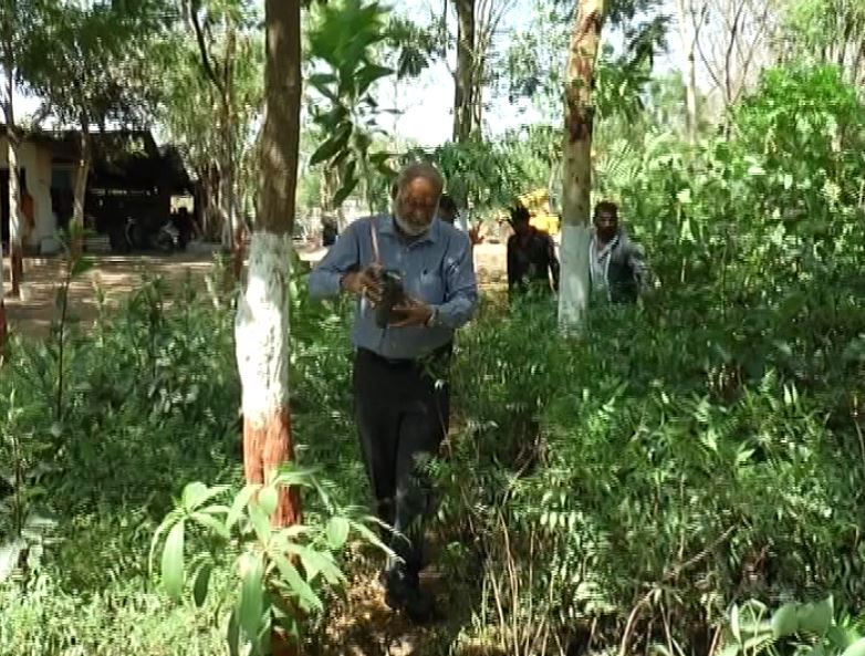 નરોડા GIDCની નવી પહેલ, એસ્ટેટમાં 70 હજાર વૃક્ષો વાવ્યાં
